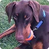Adopt A Pet :: Rango - Arlington, VA