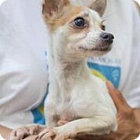 Adopt A Pet :: Linda - Coral Springs, FL