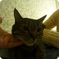 Adopt A Pet :: Titus - Manchester, CT