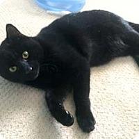 Adopt A Pet :: Jellybean - Merrifield, VA