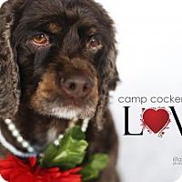 Adopt A Pet :: Noelle - Sherman Oaks, CA