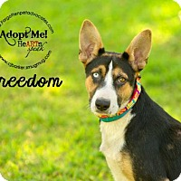 Adopt A Pet :: Freedom - Pearland, TX