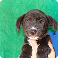 Adopt A Pet :: Rader - Oviedo, FL