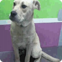 Adopt A Pet :: Buddy - Fort Collins, CO