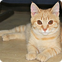 Adopt A Pet :: Bagherra - Jefferson, NC