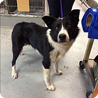 Adopt A Pet :: TEX - San Pedro, CA