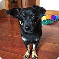 Adopt A Pet :: *Milo - Elgin, IL