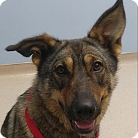 Adopt A Pet :: Chaia - Allentown, PA
