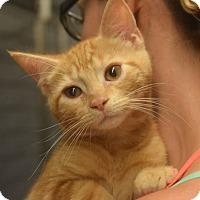Adopt A Pet :: Toby - Sparta, NJ