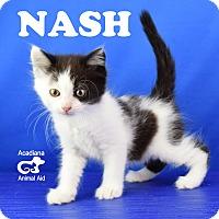 Adopt A Pet :: Nash - Carencro, LA