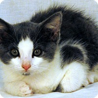 Adopt A Pet :: Grey Pants - Newland, NC