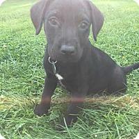 Adopt A Pet :: Omni - Thompson, PA