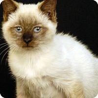 Adopt A Pet :: Shakespeare - Newland, NC