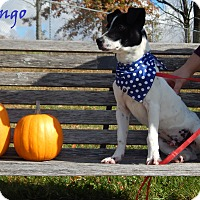 Adopt A Pet :: Bongo - Bucyrus, OH