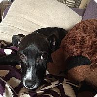 Adopt A Pet :: Allie - Bridgewater, NJ