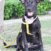 Adopt A Pet :: Rebecca - Castro Valley, CA