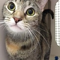 Adopt A Pet :: Gigi - New York, NY