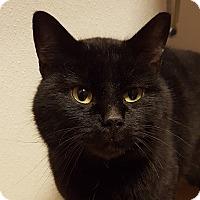 Adopt A Pet :: Coggsworth - Grayslake, IL