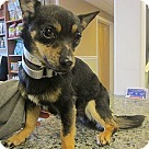 Adopt A Pet :: JoJo- Tiny Shy Boy