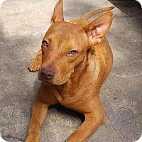 Adopt A Pet :: Kristy - San Diego, CA
