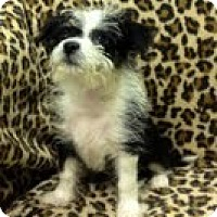 Adopt A Pet :: C.J. - Staunton, VA