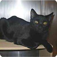Adopt A Pet :: Pacman - Colmar, PA