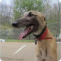Adopt A Pet :: Paul (PTL Paul) - Chagrin Falls, OH