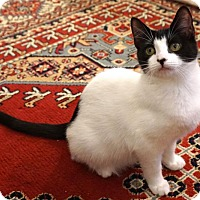 Adopt A Pet :: 007 - Bedford, MA