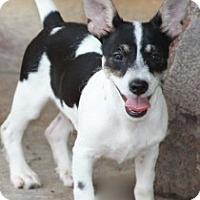 Adopt A Pet :: Leonardo - Norwalk, CT