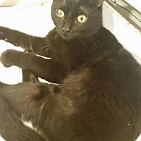 Adopt A Pet :: Katmandu - Fredericksburg, VA