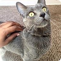Adopt A Pet :: Luna - Novato, CA