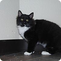 Adopt A Pet :: Panda - Ridgway, CO