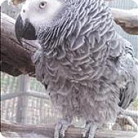 Adopt A Pet :: Eko - Elizabeth, CO