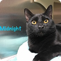 Adopt A Pet :: Midnight - Foothill Ranch, CA