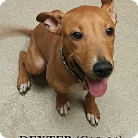 Adopt A Pet :: Dexter - Tiffin, OH