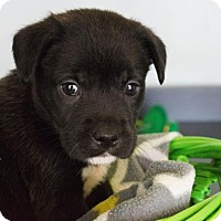 Adopt A Pet :: Angela $250 - Seneca, SC