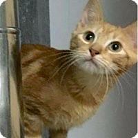 Adopt A Pet :: Ollie - Lincoln, NE