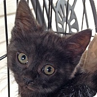 Adopt A Pet :: Bautista - Mississauga, Ontario, ON