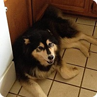 Adopt A Pet :: Buffy - Scottsboro, AL