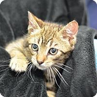 Adopt A Pet :: Scottie160812 - Atlanta, GA