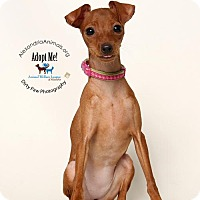 Adopt A Pet :: Petty - Alexandria, VA
