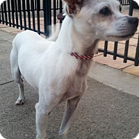 Adopt A Pet :: Chiquita - Houston, TX