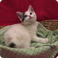Adopt A Pet :: Fauna - Redwood Falls, MN