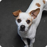Adopt A Pet :: Albert - Meridian, ID