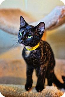 Domestic Shorthair Cat for adoption in Markham, Ontario - Jilly