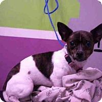 Adopt A Pet :: CHICA - Houston, TX