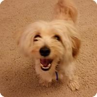 Adopt A Pet :: Flynn - Portland, OR