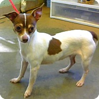 Adopt A Pet :: Gretchen - Decatur, GA