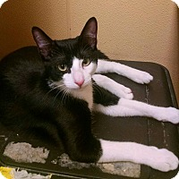Adopt A Pet :: Steven - Madisonville, LA