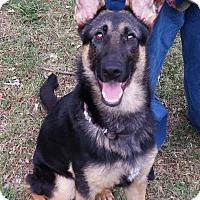 German Shepherd Dog Mix Dog for adoption in Mount Ayr, Iowa - Gabby